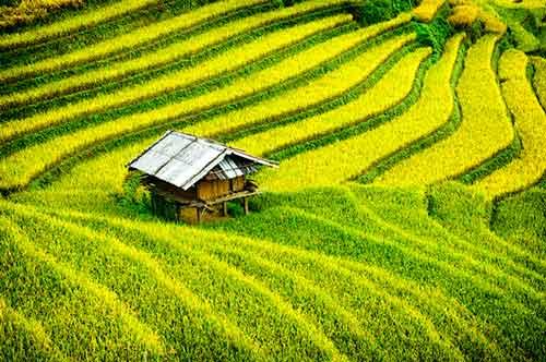 Pourquoi faire un voyage au Vietnam en mars ?