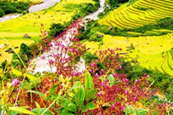 Profitez du climat Nord Vietnam pour un voyage sans souci !